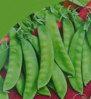 Душистый горошек: выращивание из семян, посадка и уход