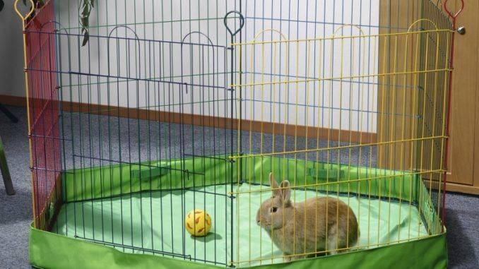 Как сделать загон для кроликов