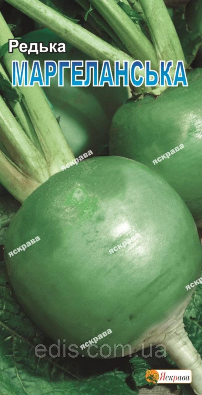Маргеланская редька или китайская лоба: что это такое, как ей лечиться, выращивание, уход в открытом грунте, описание сорта барыня и других, фото корнеплода