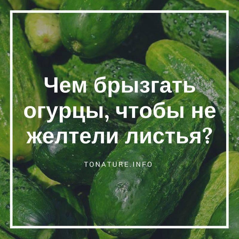 Желтеют листья огурцов что делать народные средства
