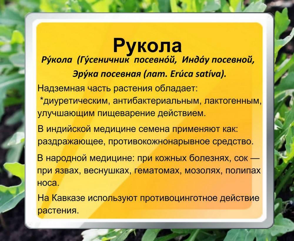 Цветок похожий на одуванчик, но не одуванчик название. описание и фотографии цветов, похожих на одуванчик