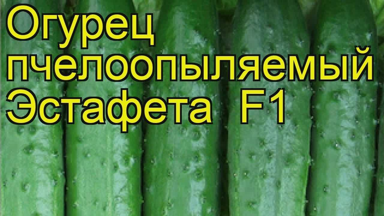 Преимущества и недостатки гибрида огурцов «эстафета f1»