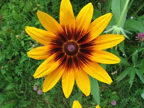 О садовых цветах многолетниках: названия самых красивых, высоких растений