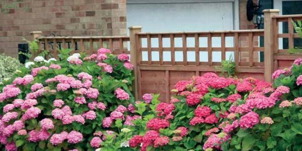 Клумба непрерывного цветения — буйство красок в саду круглый год. создаем клумбу непрерывного цветения своими руками.