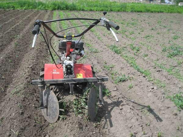 Как прополоть картофель мотоблоком, как сделать междурядную обработку