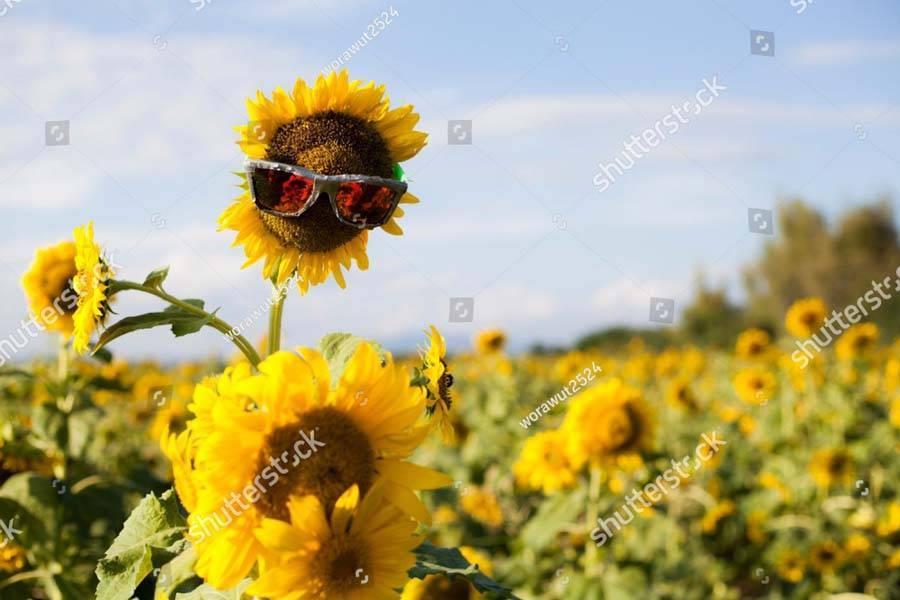 Когда начинают цвести сады. вечно цветущий сад: условия и сроки цветения. как цветут растения