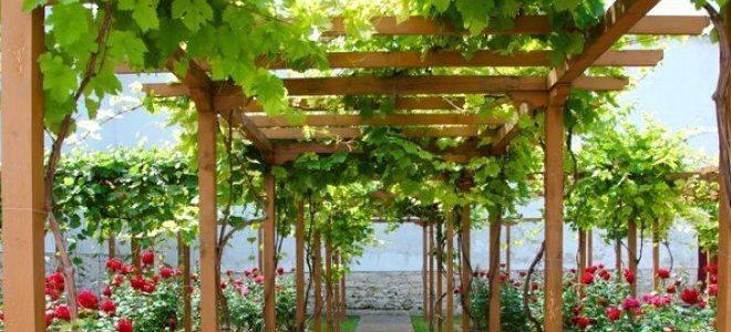 Беседка из профильной трубы (33 фото): изделие из профтрубы для винограда, размеры конструкций из металлических труб, схема круглой беседки