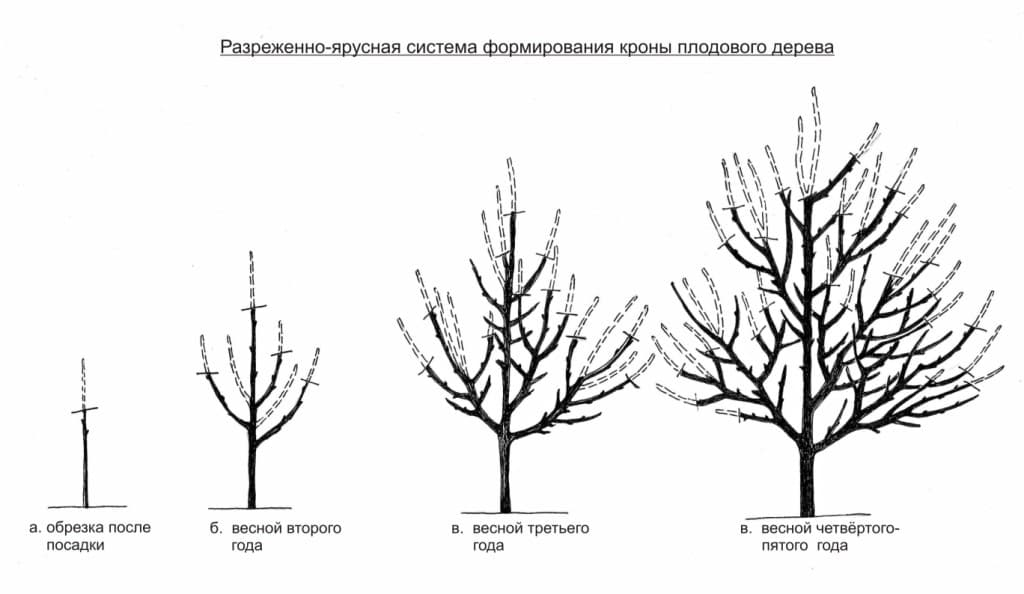 Обрезка груши весной: правила, особенности и инструкция для начинающих