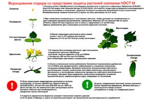 Фитогормон, стимулятор роста и стрессовый адаптоген эпин — экстра: инструкция по применению для комнатных растений, правила обработки красивоцветущих и декоративно-лиственных видов
