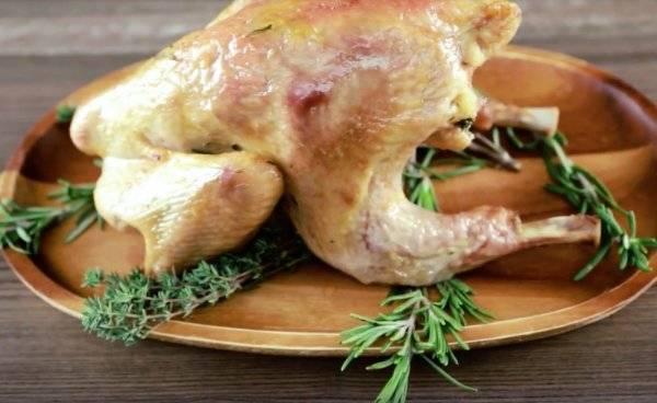 Насколько вкусное мясо цесарки и лучше ли оно куриного | русская семерка