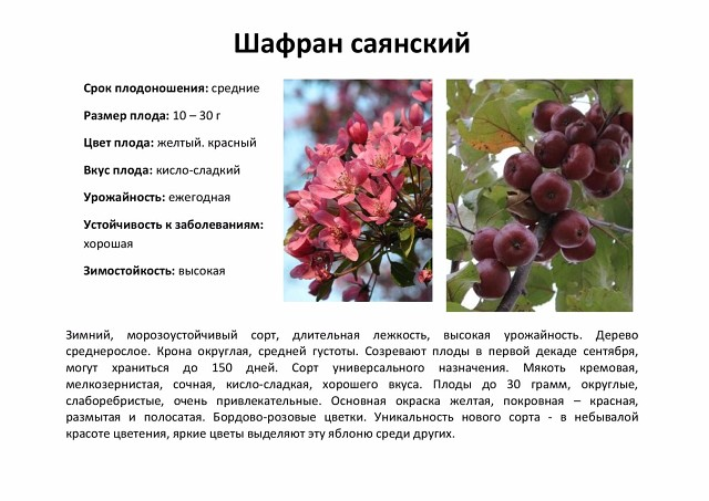 Ботаническое описание и агротехника выращивания яблони сорта пепин шафранный
