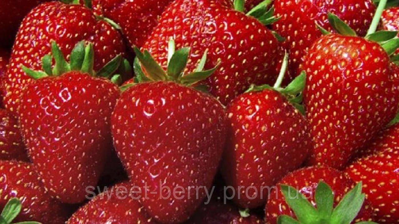 Клубника даренка: описание и особенности выращивания раннего сорта