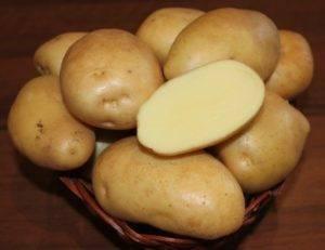 Картофель голубизна - описание сорта, характеристика, фото