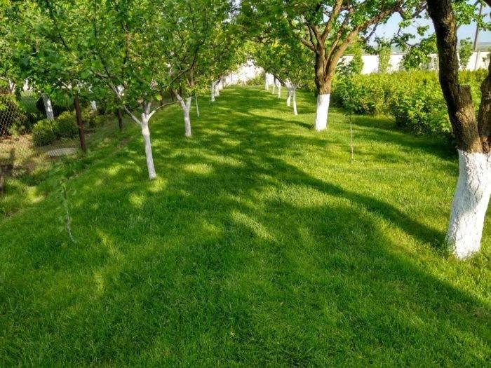 Осенняя обрезка плодовых кустарников