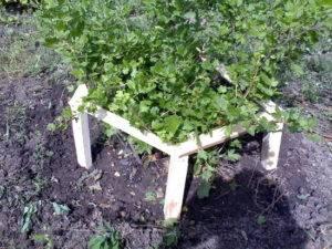 Ограждение для кустов смородины из арматуры