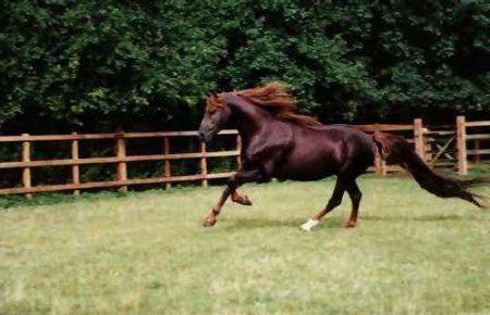 Топ-10 самых дорогих лошадей в мире