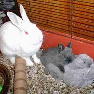 Сколько длится беременность у кроликов: все о сукрольности