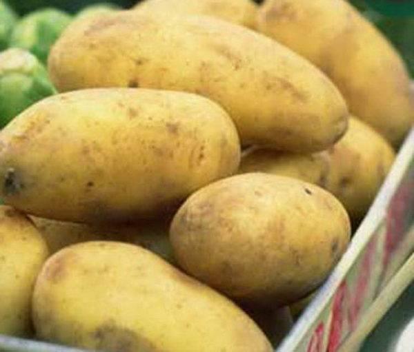 Сорт картофеля наташа: описание и характеристика, отзывы