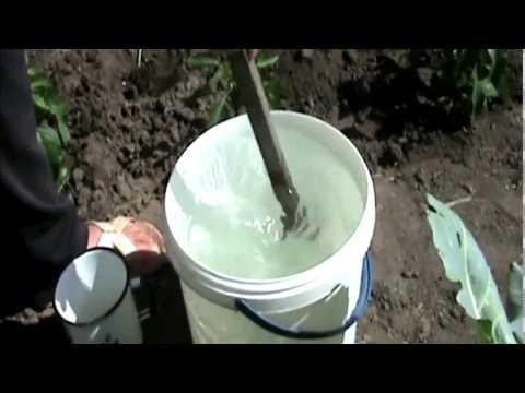 Чем подкармливать клубнику во время цветения, чтобы повысить урожай