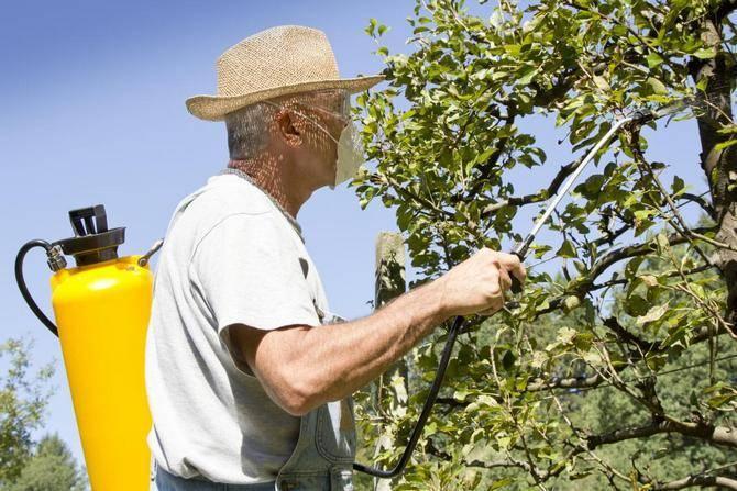 Как удобрять плодовый сад