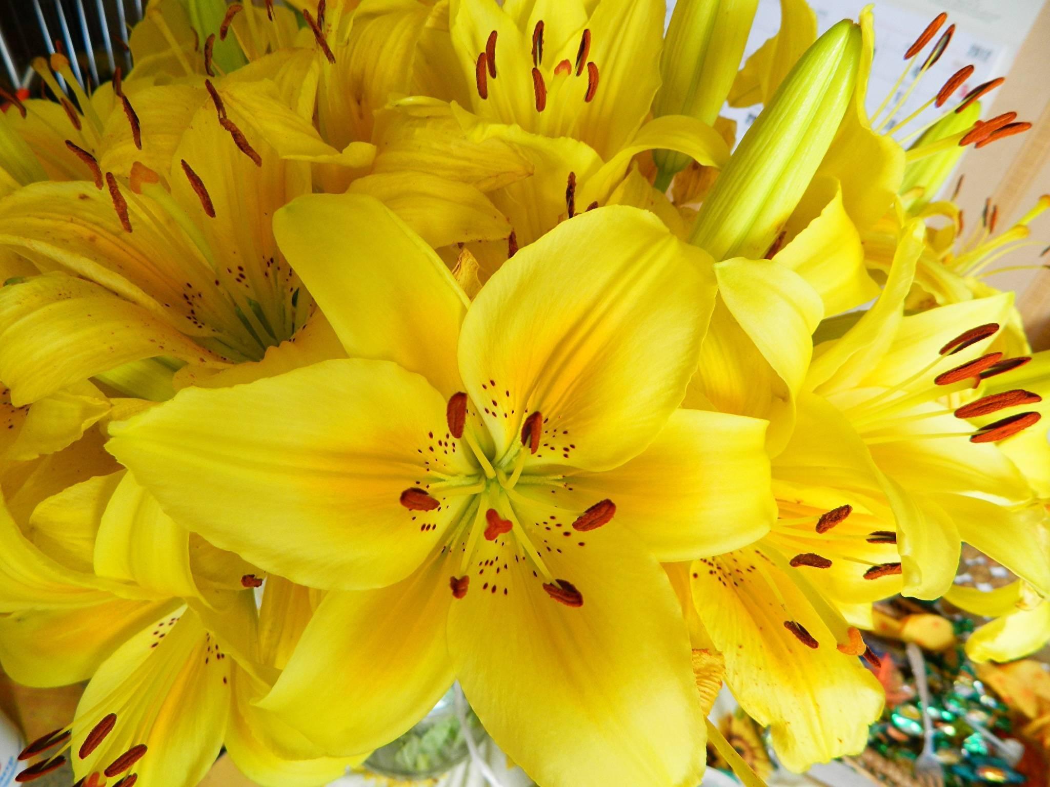 Почему мельчают цветки у лилий   pokayadoma.ru