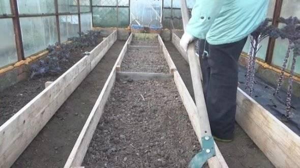Как вырастить редис в теплице рано весной: подходящие сорта, время посева, правила выращивания