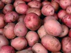 Лучший голландский сорт картофеля ред скарлет