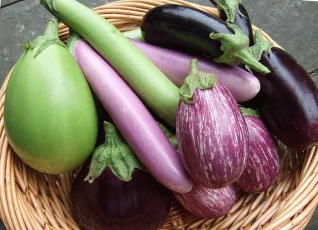 Баклажан черный красавец: высокоурожайный сорт и его характеристики