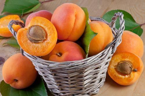 Удобрения для абрикоса