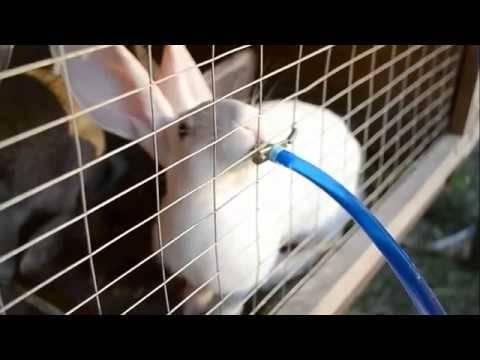 Содержание и уход за кроликами в домашних условиях