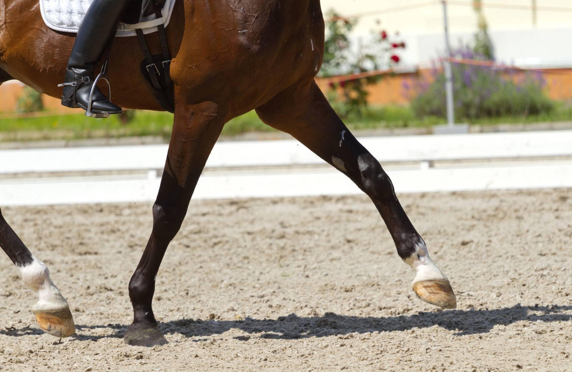 Подбор лошади (подобрать лошадь)