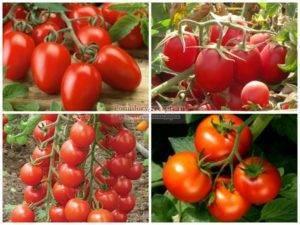 Какие сорта томатов выбрать для посадки — отзывы