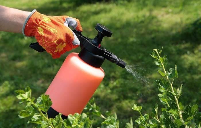 Как ухаживать за кустами смородины и крыжовника весной — основные шаги и правила