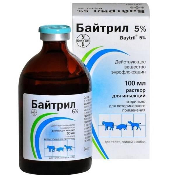Применение байтрил 10% для кур при лечении и профилактике заболеваний