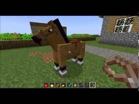 Как приручить и укротить лошадь? 2020