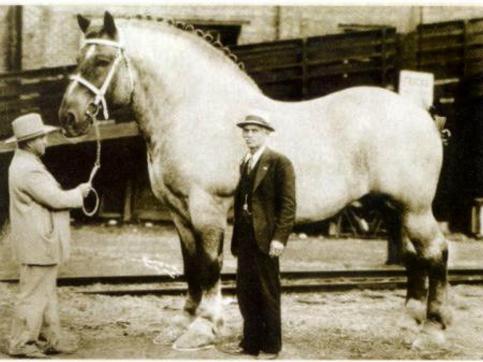 Вес лошади: средние показатели, особенности измерения