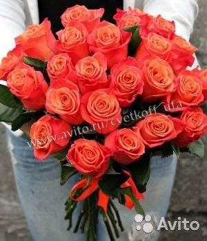 Роза коралловый сюрприз — визитная карточка крыма   о розе