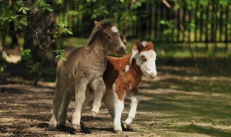 Корм для лошадей: виды, рецепты, рацион питания