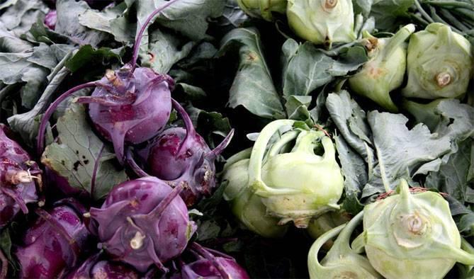 Капуста кольраби— выращивание рассады, уход в период созревания