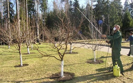 Каким образом, когда и чем опрыскивать деревья весной — подробная инструкция