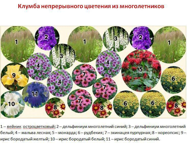 Однолетники для клумбы непрерывного цветения — раз посеял, радуют до поздней осени.