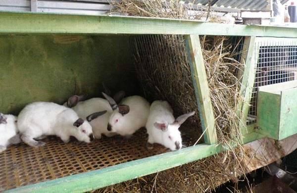 Особенности содержания кроликов зимой