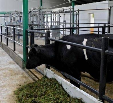 Мини ферма для коров своими руками