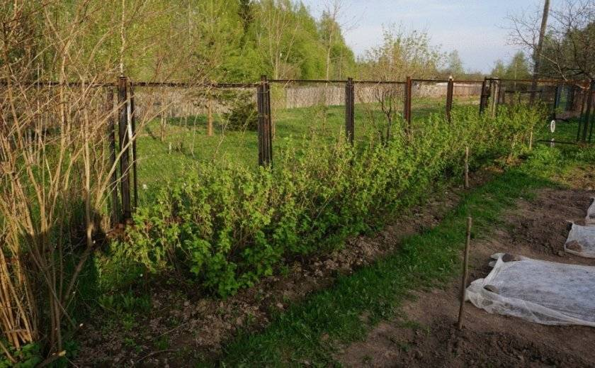 Таблица расстояний между деревьями при посадке сада и советы по планировке территории