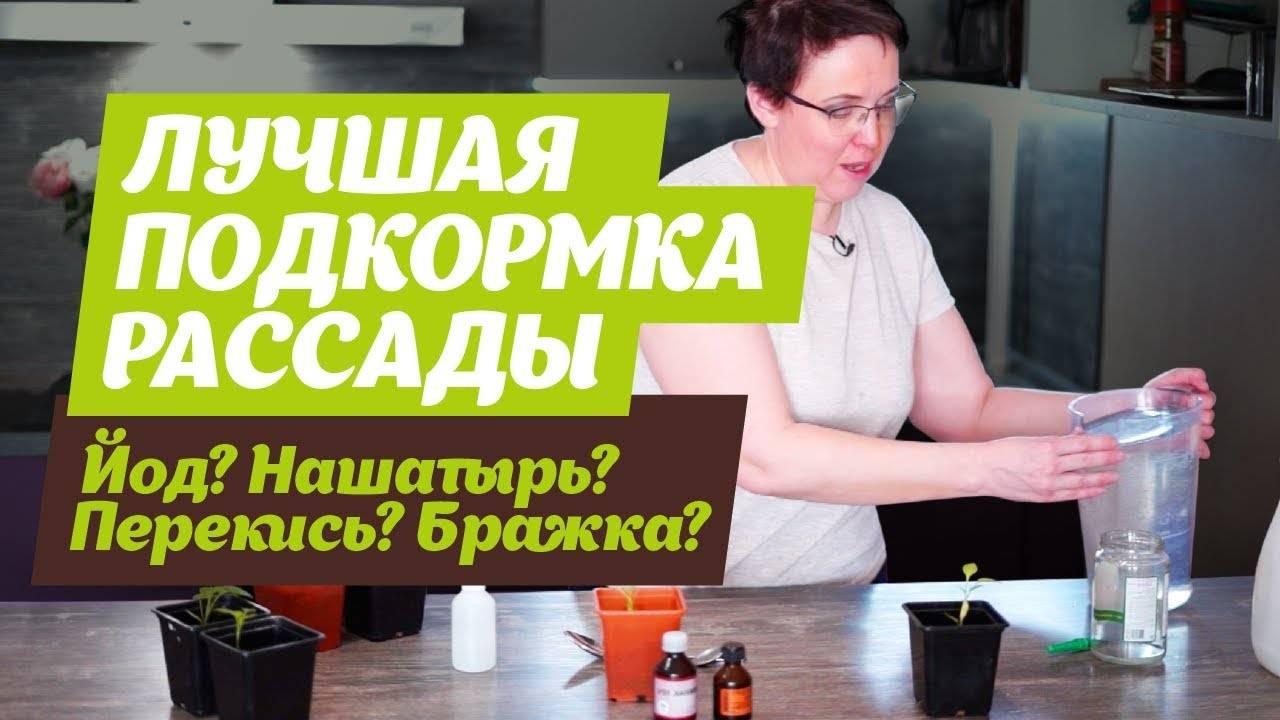Как и когда подкармливать болгарский перец нашатырным спиртом