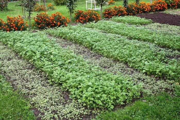 Удобрения для моркови при посадке весной и осенью