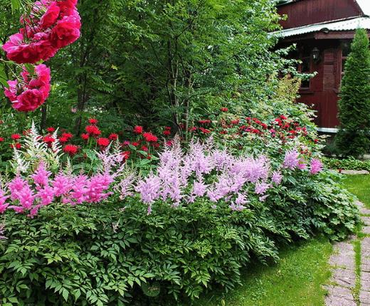 Лилейники в ландшафтном дизайне сада — сочетание с другими растениями