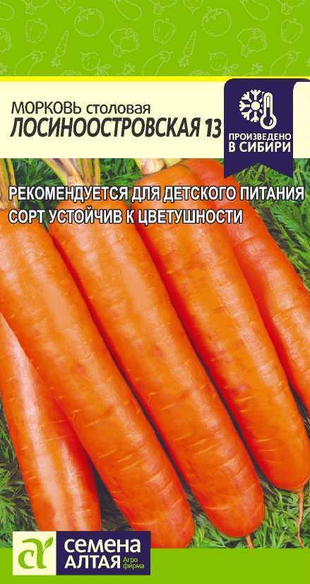 Морковь сорта «лосиноостровская 13»: описание и советы по выращиванию