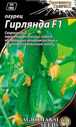 Об огурцах Сибирская гирлянда: описание и характеристики сорта, посадка и уход