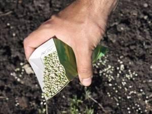 Чем подкормить грушу осенью для хорошей зимовки и чтобы был хороший урожай